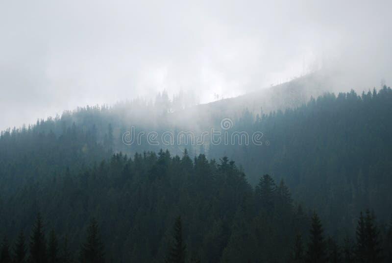 Nebeliger Tag in den Bergen lizenzfreies stockbild