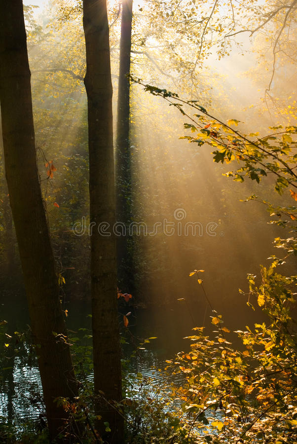 Nebeliger Wald, Natur stockfotos
