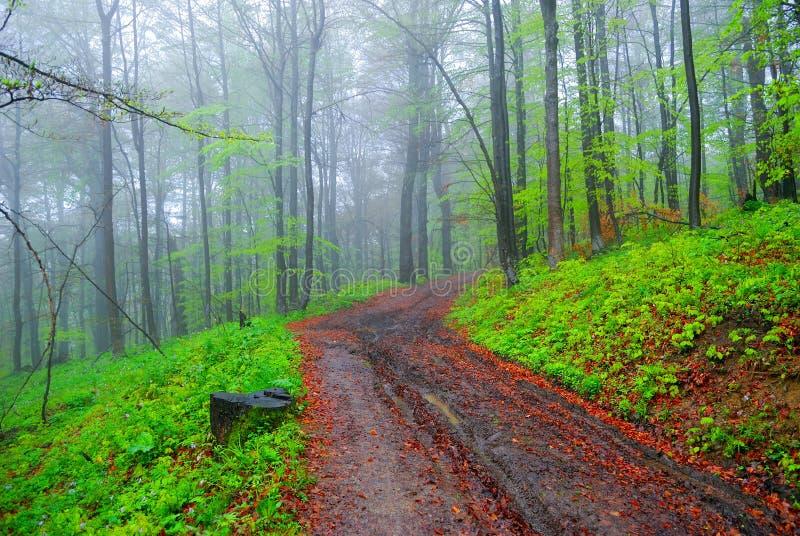 Nebeliger Wald und Schotterweg stockfoto