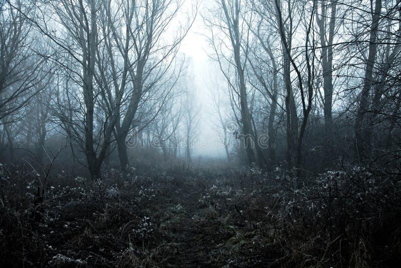 Nebeliger Winter stockbild