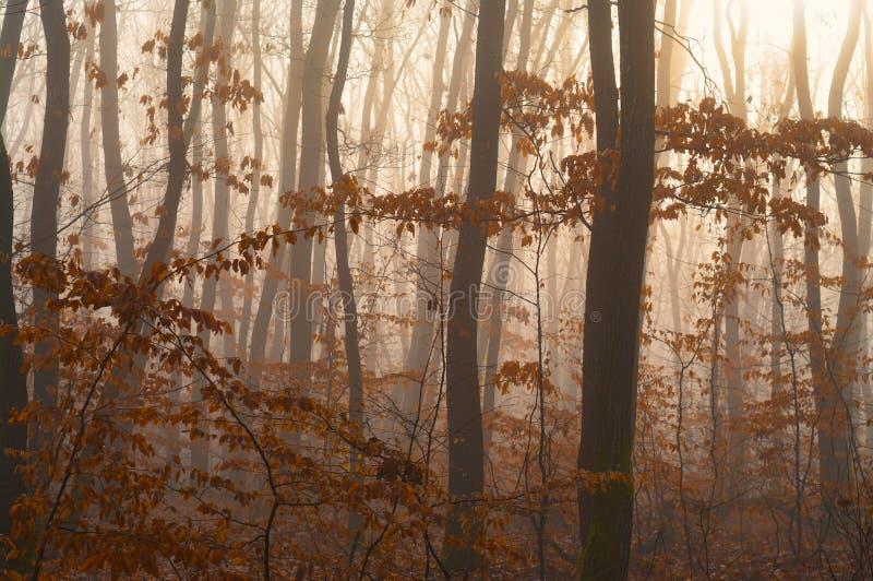 Nebeliges Herbstwalddetail stockfoto