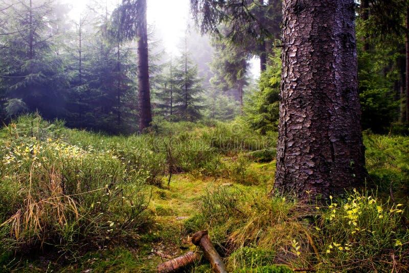 Nebeliges Holz 2 stockbild