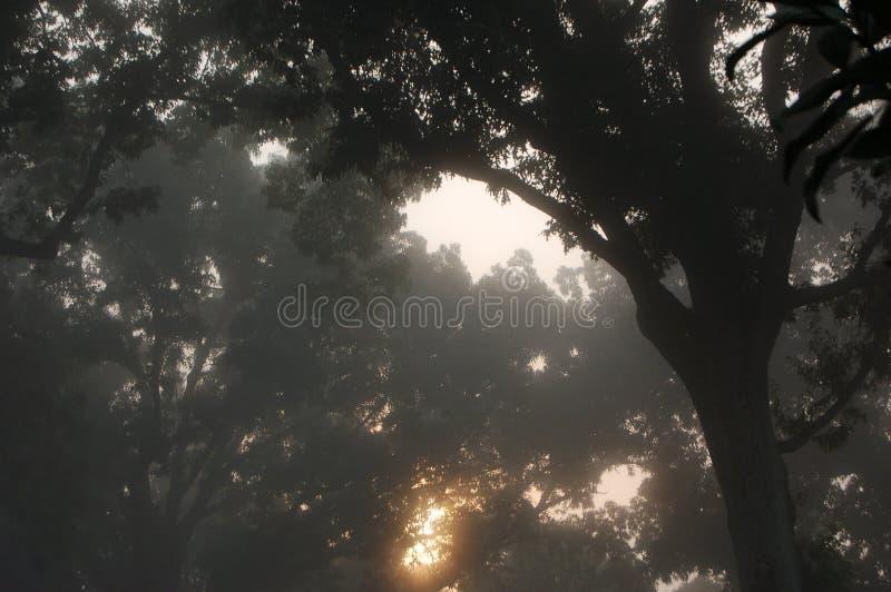 Nebeliges Schattenbild der Bäume stockfotografie