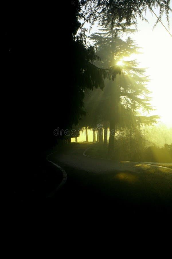 Nebelmorgen lizenzfreie stockbilder