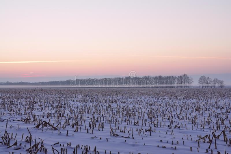 Nebeln Sie über dem Feld und den Bäumen am frühen eisigen Morgen ein stockfotos