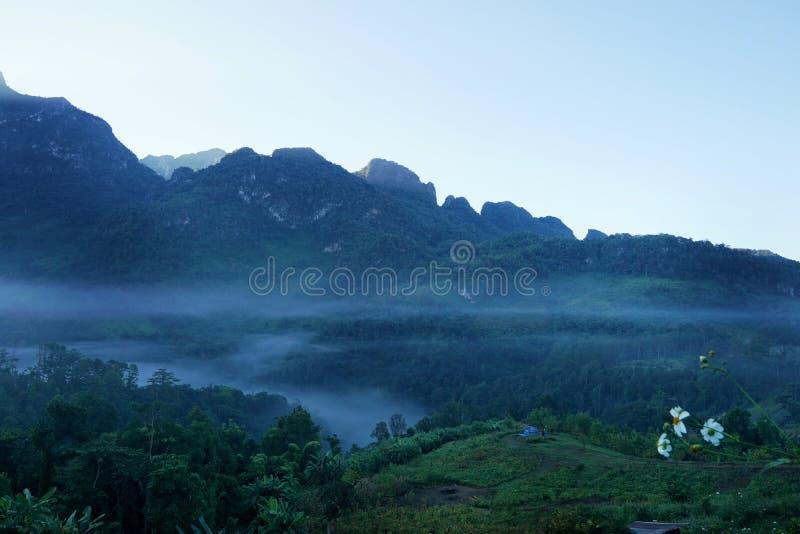 Nebeln Sie morgens bei Doi Chiang Dao, Thailand ein, immergrüner Wald des Überflusses und nebelig lizenzfreie stockfotos