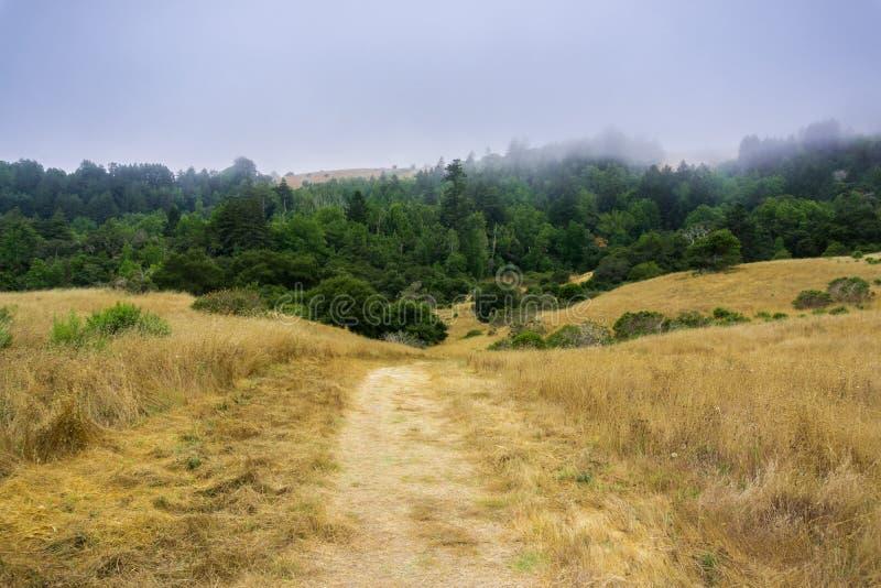 Nebeln Sie Rollen über Hügeln und Wiesen, Santa Cruz, Kalifornien ein stockbilder