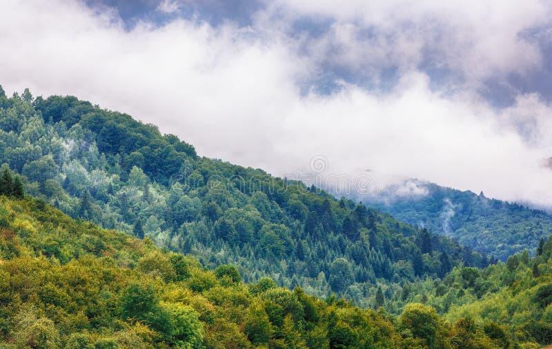 Nebeln Sie Wolken am mystischen Holz der Kiefers, Morgen ein lizenzfreie stockbilder