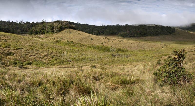 Nebelwald, -savanne und -wolken an den Horton Ebenen lizenzfreies stockfoto