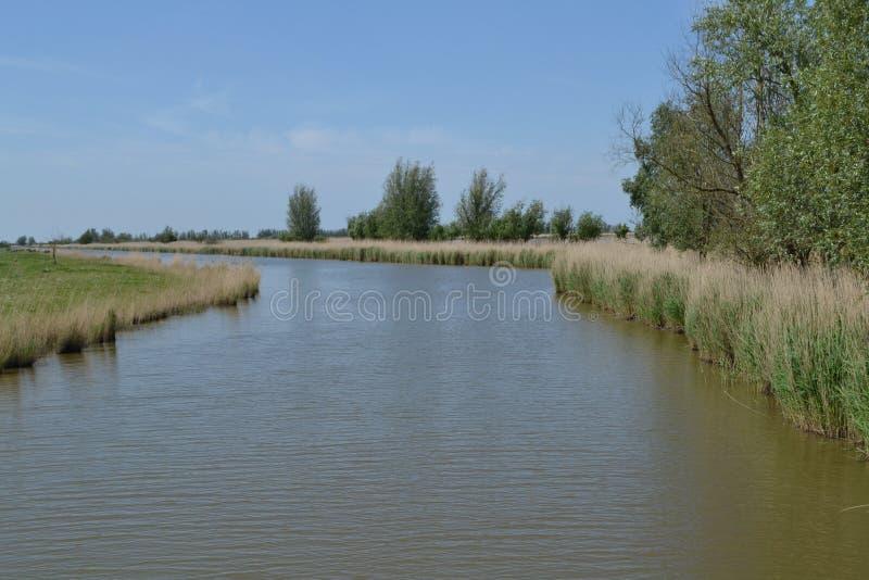 Nebenfluss in der niederländischen Naturlandschaft lizenzfreie stockbilder