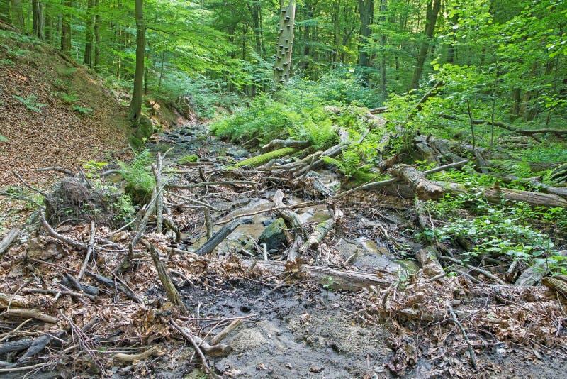 Nebenfluss im Wald von kleinen Karpatenhügeln stockfotos