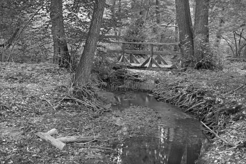 Nebenfluss im Wald von wenig Karpaten lizenzfreies stockfoto