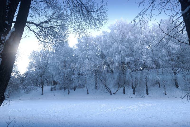 Neblina escarchada en un día de invierno - frío punzante y visión fantástica fotografía de archivo