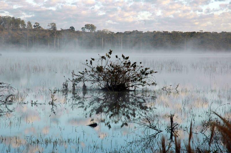 Neblina Na lagoa stockbilder
