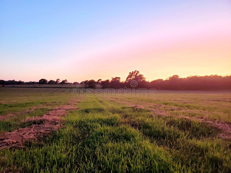 Nebraska alfalfa field. Cut, bale, hay, baler, tractor, agriculture, farm, silage, grazing, sunset, grass, clover, feed, seed, lucerne, cover, crop, farming stock photos