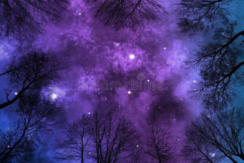 Nebulosa brilhante no céu noturno estrelado, árvores da calha da opinião de baixo ângulo imagens de stock