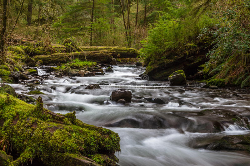 Necarney Creek smooth water flow Oswald West State Park royalty free stock photography