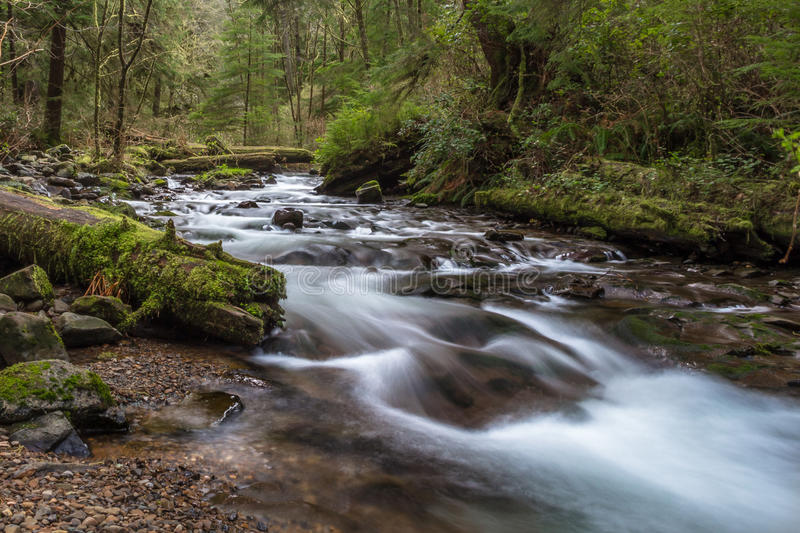 Necarney Creek smooth water flow Oswald West State Park stock images