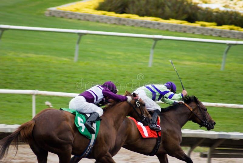 Horses Racing at Track royalty free stock photo