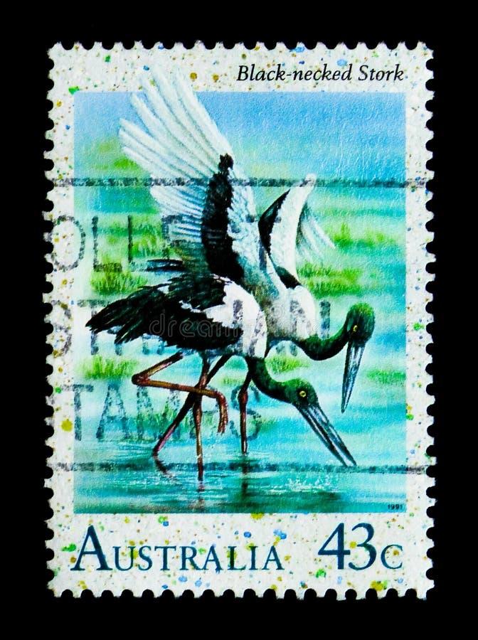 Necked bocian, ptaka seria, ci (Ephippiorhynchus asiaticus) obrazy stock