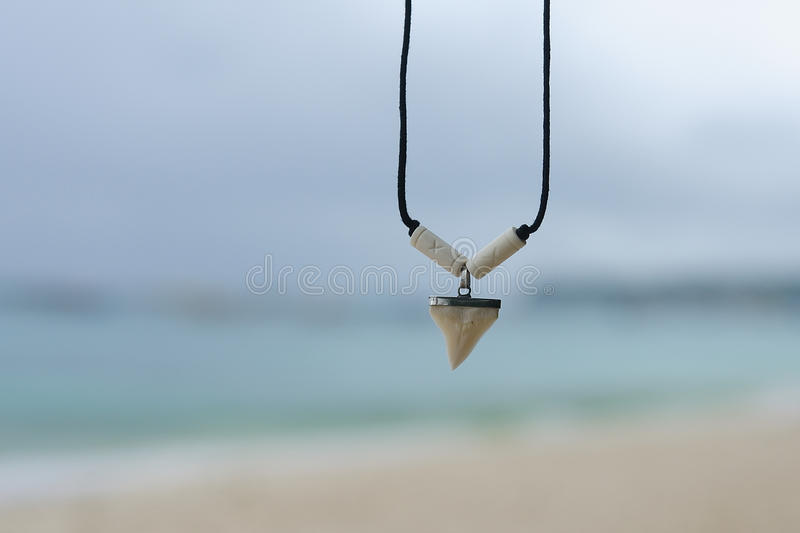 Necklace with a shark's tooth stock photos