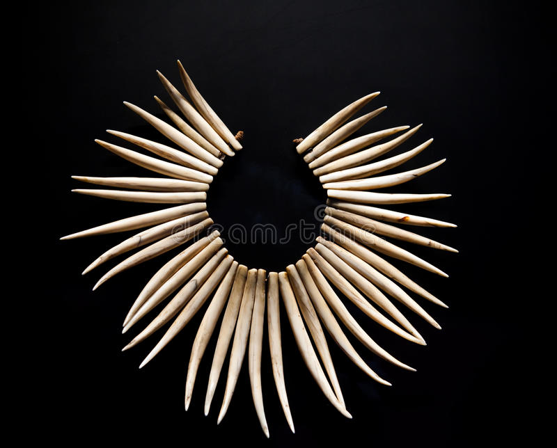 Download Necklace From Teeth Of A Predator Stock Image - Image: 23978273