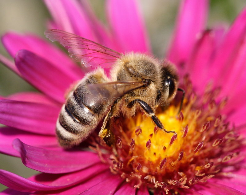 Download Nectar stock photo. Image of plant, honey, look, detail - 687374