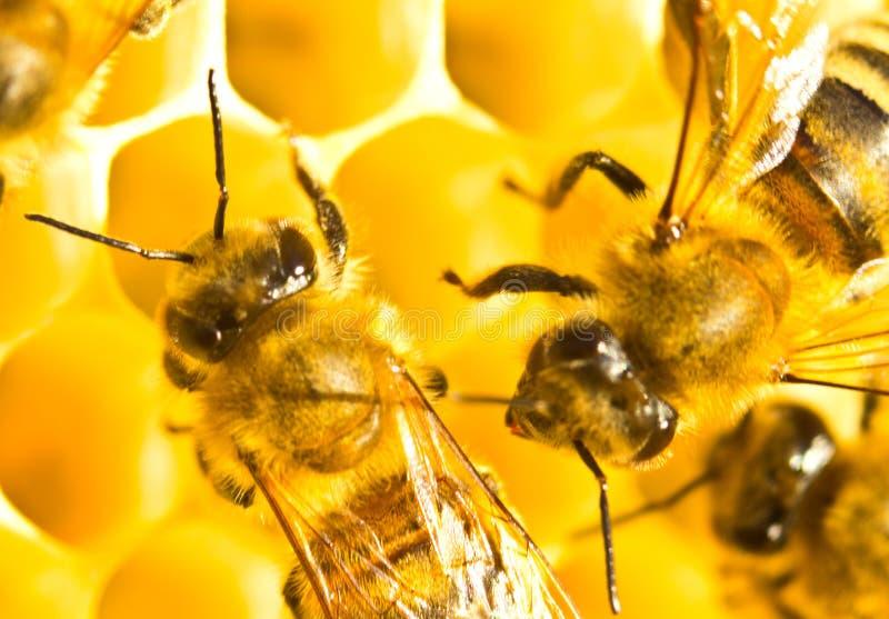 Nectar et miel dans le nouveau peigne photos libres de droits