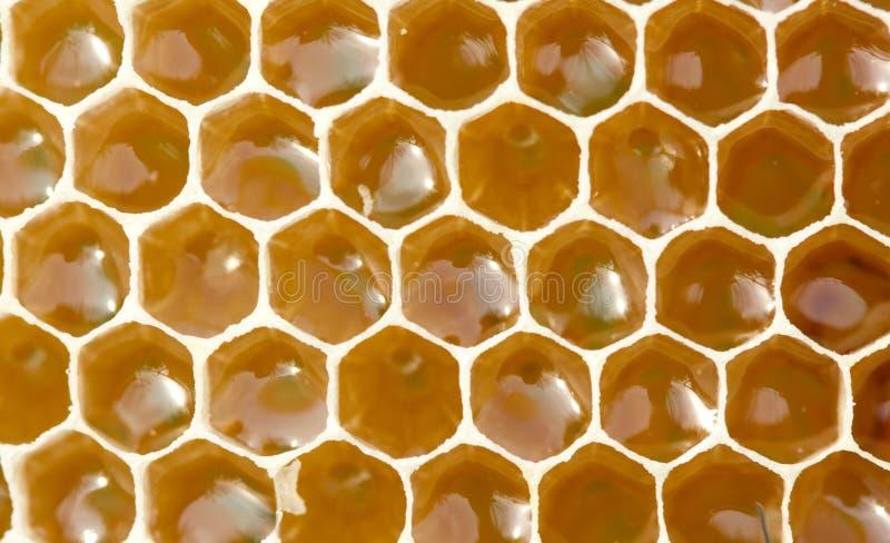 Nectar et miel dans le nouveau peigne photos stock