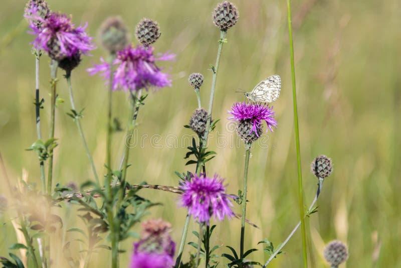 Nectar Paradise para una mariposa hermosa fotos de archivo libres de regalías
