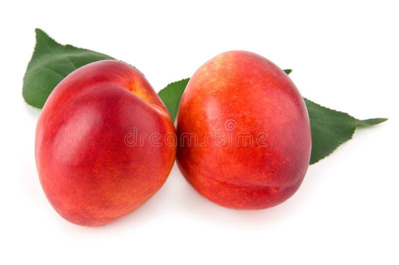 Nectarina foto de stock