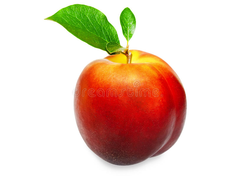 Nectarine. Single nectarine with green leaves over white background royalty free stock images