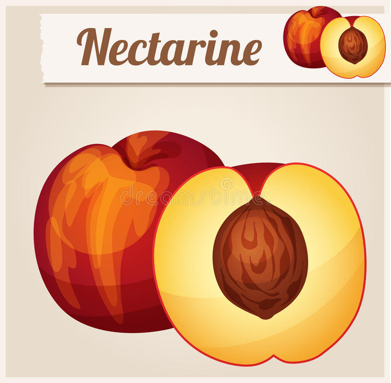 Nectarine. Detailed Vector Icon vector illustration