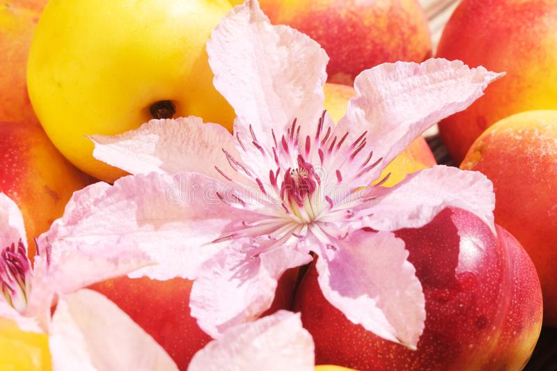 Nectarine Close-Up On A Wooden Table royalty free stock image