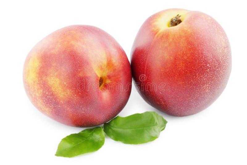 Nectarine op wit stock afbeeldingen