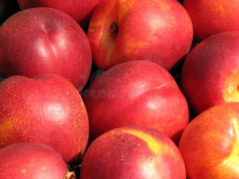 Nectarines royalty-vrije stock afbeelding