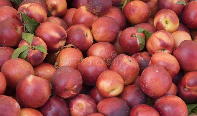 Nectarines. Italian nectarines on a market stock photos