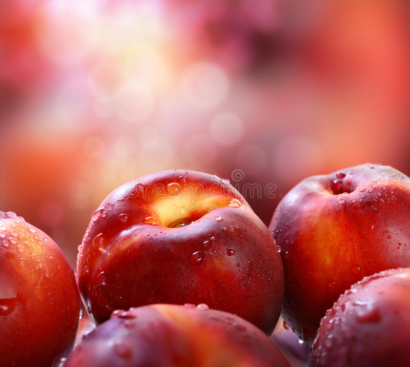Nectarines in garden. Fresh, ripe nectarines in garden stock image