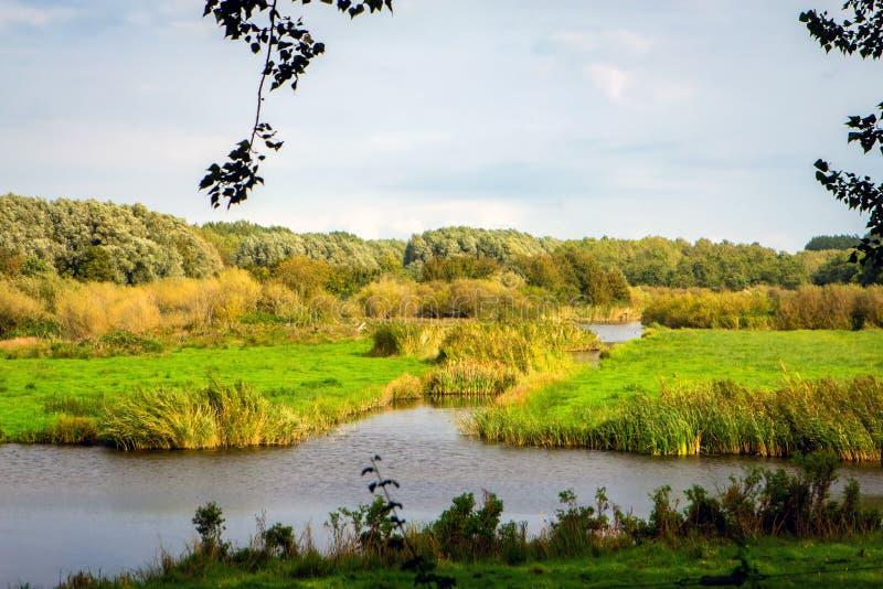 Nederländernas gröna hjärta arkivbilder