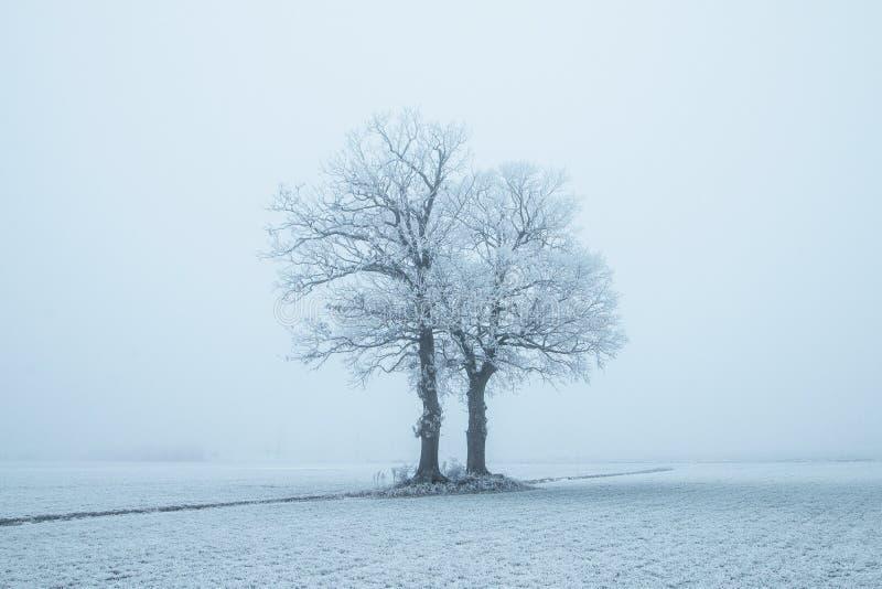 Nederland, landschappen en molens in wintertijd stock fotografie