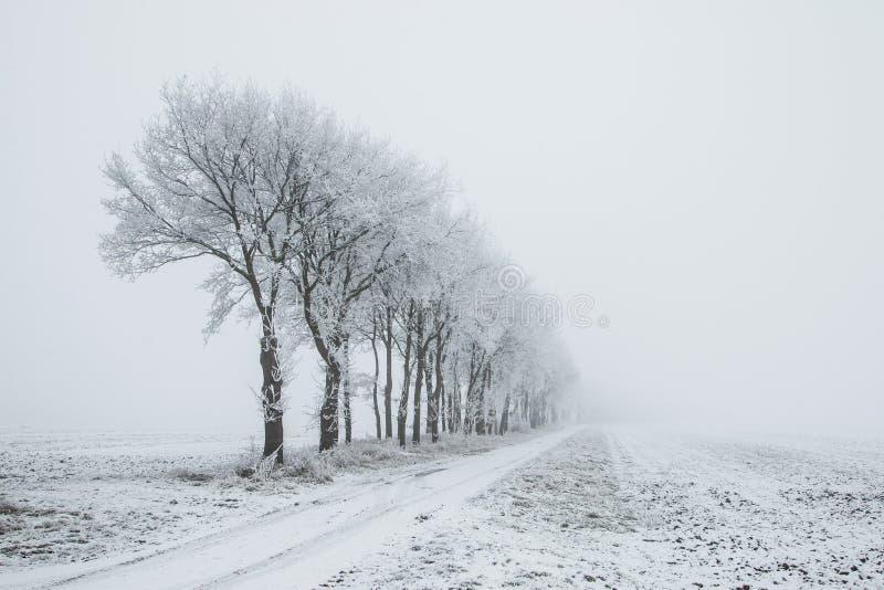 Nederland, landschappen en molens in wintertijd royalty-vrije stock afbeelding