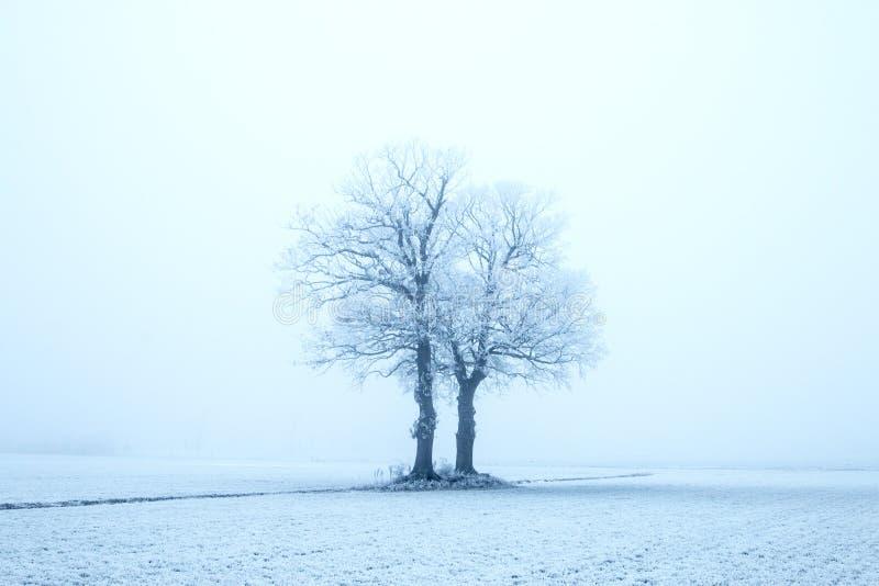 Nederland, landschappen en molens in wintertijd stock foto