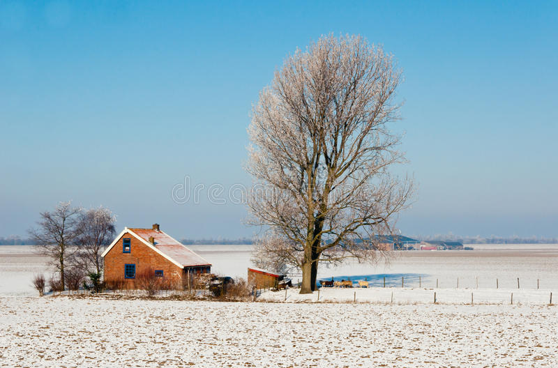 Nederlands landbouwbedrijf in de winter royalty-vrije stock foto
