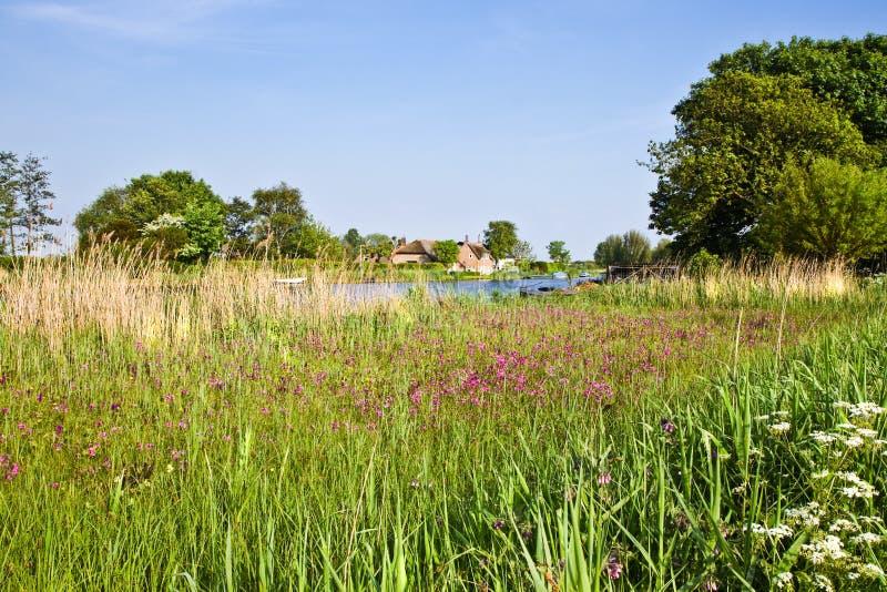 Nederlands landlandschap met landbouwbedrijf in de lente stock afbeelding