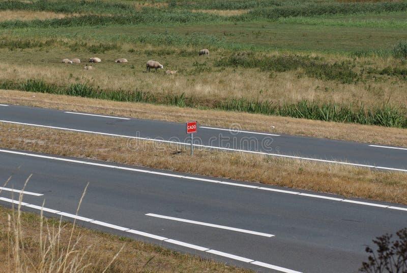 Nederlands woord CADO op verkeersteken royalty-vrije stock foto's