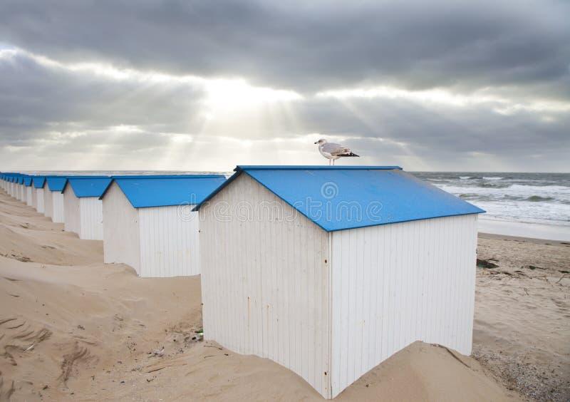 Nederlandse kleine huizen op strand met zeemeeuw stock afbeeldingen