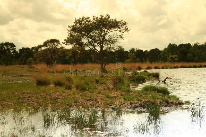Nederlandse landschapsBomen en wolken royalty-vrije stock afbeelding