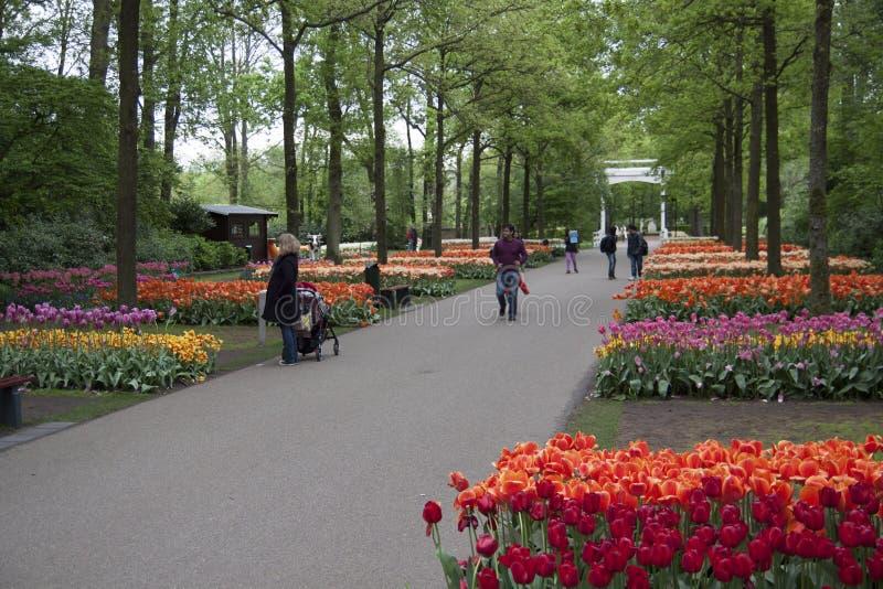 Nederlandse tulpentuinen royalty-vrije stock afbeelding