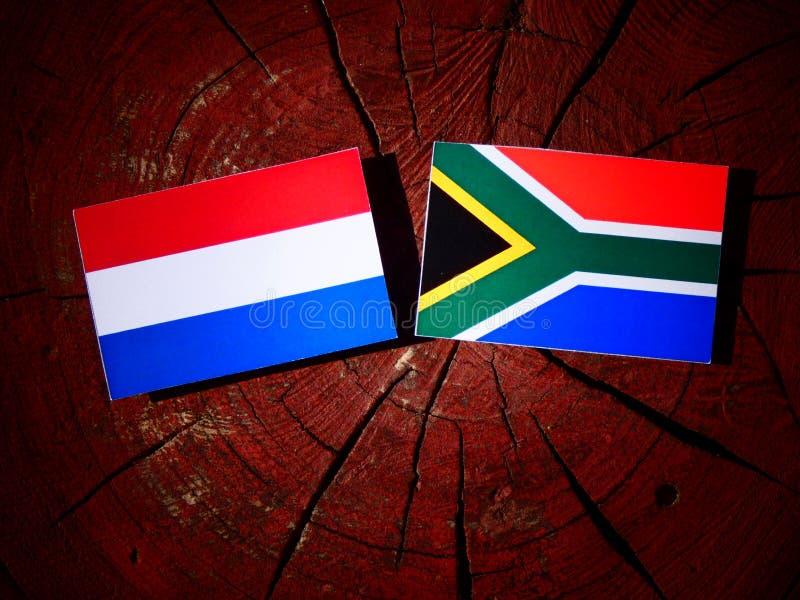 Nederlandse vlag met Zuidafrikaanse vlag op een geïsoleerde boomstomp stock afbeeldingen