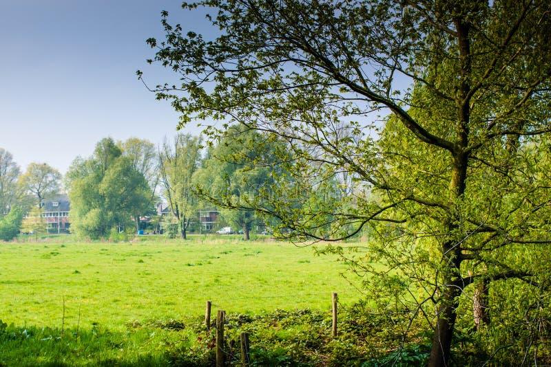 Nederlandse Weide royalty-vrije stock fotografie